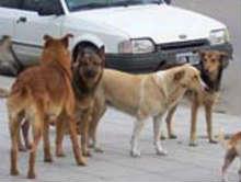 Resultado de imagen para perros sueltos en el bolson